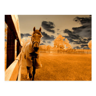 surreal horse walking down fence orange sky postcard
