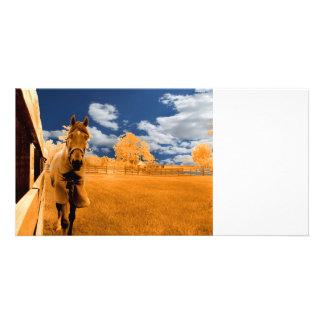 surreal horse walking fence orange blue sky photo card
