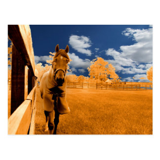 surreal horse walking fence orange blue sky postcard