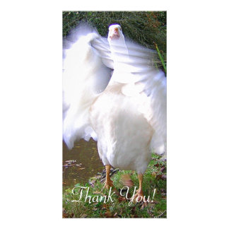 Surreal Motion Blurred Picture Of White Goose Flap Photo Card