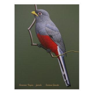 Surucua Trogon - female Postcard
