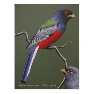 Surucua  Trogon - male Postcard