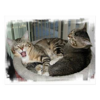Sus gatos duros de una vida tarjeta postal