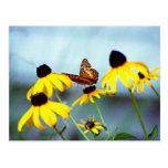 susan negro-observada con la mariposa 1 tarjetas postales