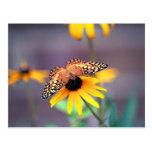 susan negro-observada con la mariposa 3 tarjetas postales