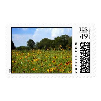 Susan observada negro sellos postales