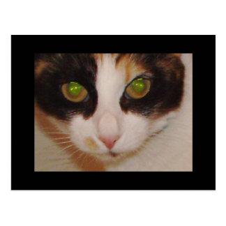 """Sushi Kitty"" Postcards"