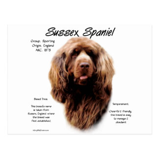 Sussex Spaniel History Design Postcard