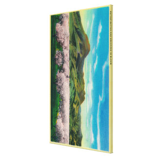 Sutter Buttes and Orchards in Bloom Canvas Print