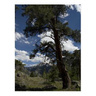 sutton mine trail view postcard