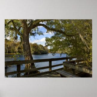 Suwannee River Boardwalk Print