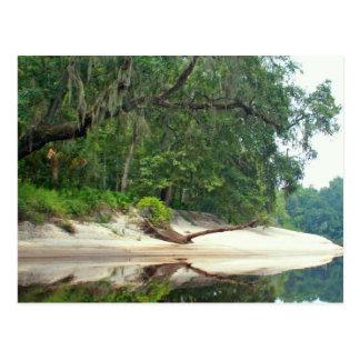 Suwannee River sandbar Postcard