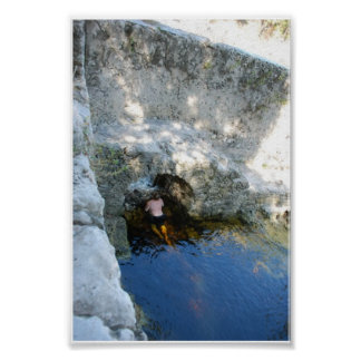Suwannee Spring Walls on the River Poster