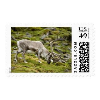 Svalbard reindeer  2 postage stamps