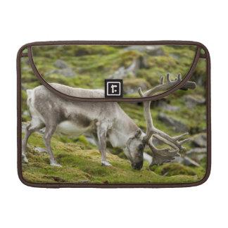 Svalbard reindeer  2 sleeve for MacBooks
