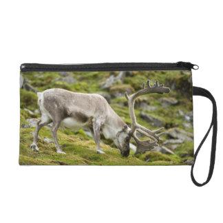Svalbard reindeer  2 wristlet purse
