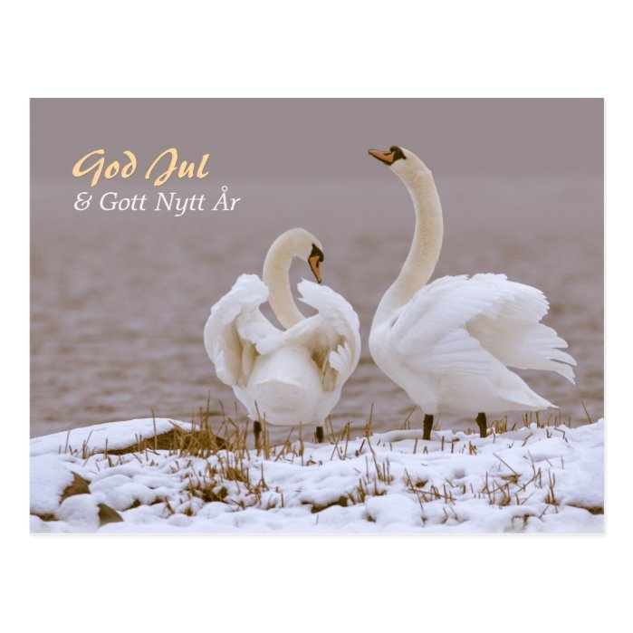 Svanpar i nysnö CC0804 Julhälsning Postcard