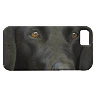 Svart Labrador hund iPhone 5 Covers