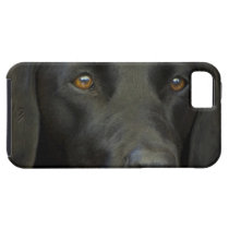 Svart Labrador hund iPhone SE/5/5s Case