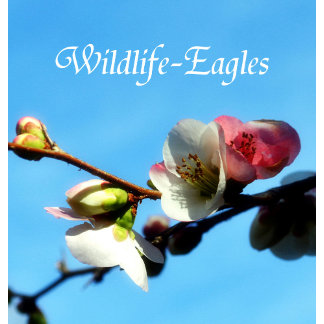 Wildlife-Eagles