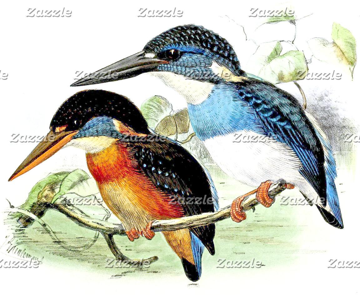 Awesome Kingfisher Birds Art