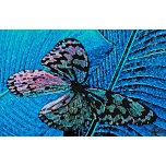 butterfly d.jpg