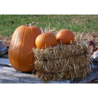 Seasonal - Autumn, Holidays
