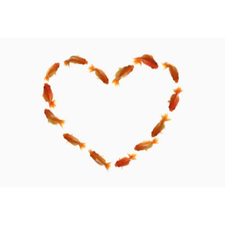 Heart made with goldfishes