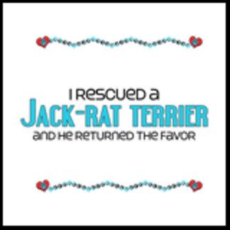 I Rescued a Jack-Rat Terrier (Male Dog)