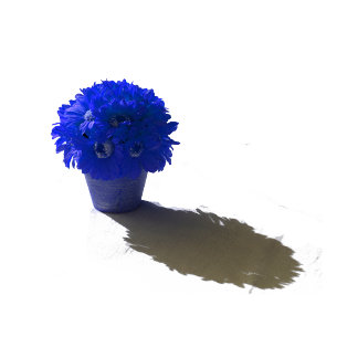 Blue Flowers White Bucket and Shadow