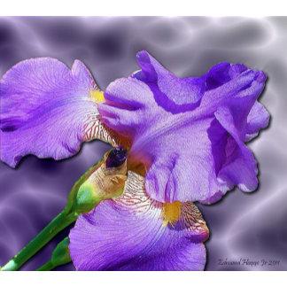 Blessed Iris