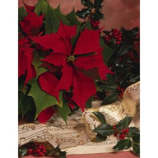 Holiday Plants | Christmas Plants | Xmas Plants