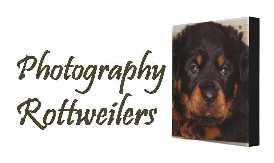 Photography - Rottweilers
