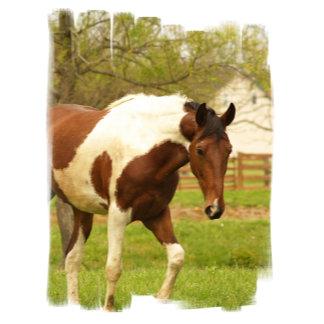 Roaming Paint Horse