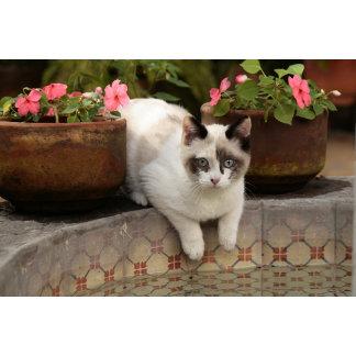 San Miguel de Allende, Mexico. Kitten rests in