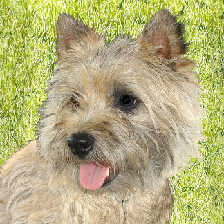 CAIRN Terrier - 29 Different Designs