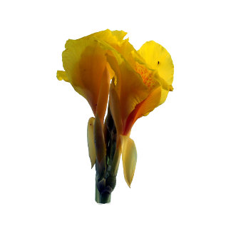 Bright Yellow Flower Cutout picture photo