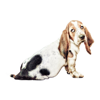 Bored Basset Hound dog