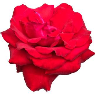 Rose Designs