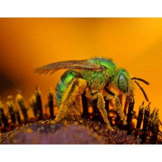Bee Getting Sweet 1