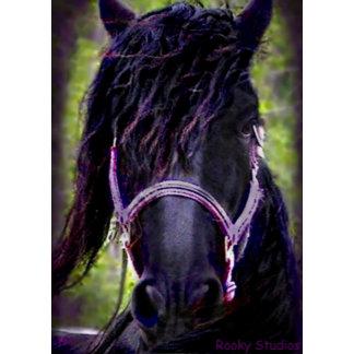 Black Stallion Series