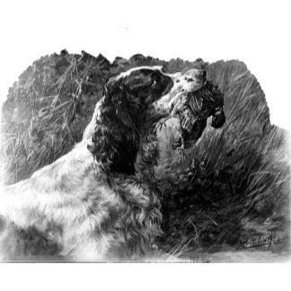 Vintage Springer Spaniel art