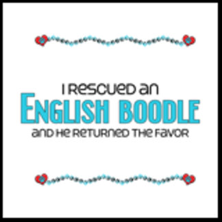 I Rescued an English Boodle (Male Dog)
