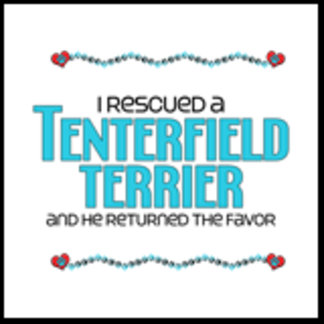 I Rescued a Tenterfield Terrier (Male Dog)
