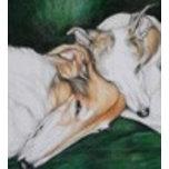 'SighthoundComfort.jpg