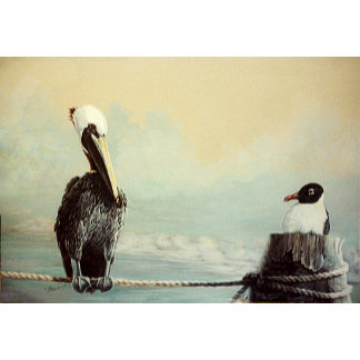 Pelican & Seagull