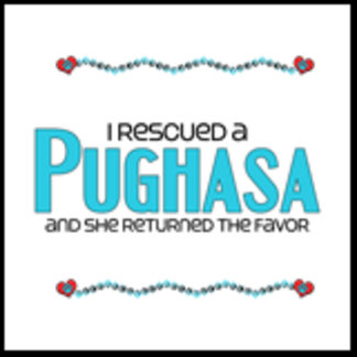 I Rescued a Pughasa (Female Dog)