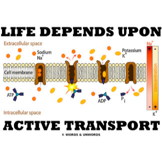 Life Depends Upon Active Transport Cell Biology