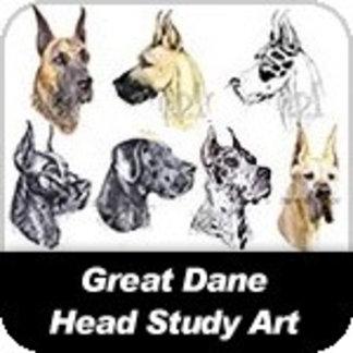 Dane Head Shots