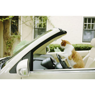 """Cat Driving Convertible Photo Poster Print"""